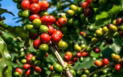 Nekemete Coffee
